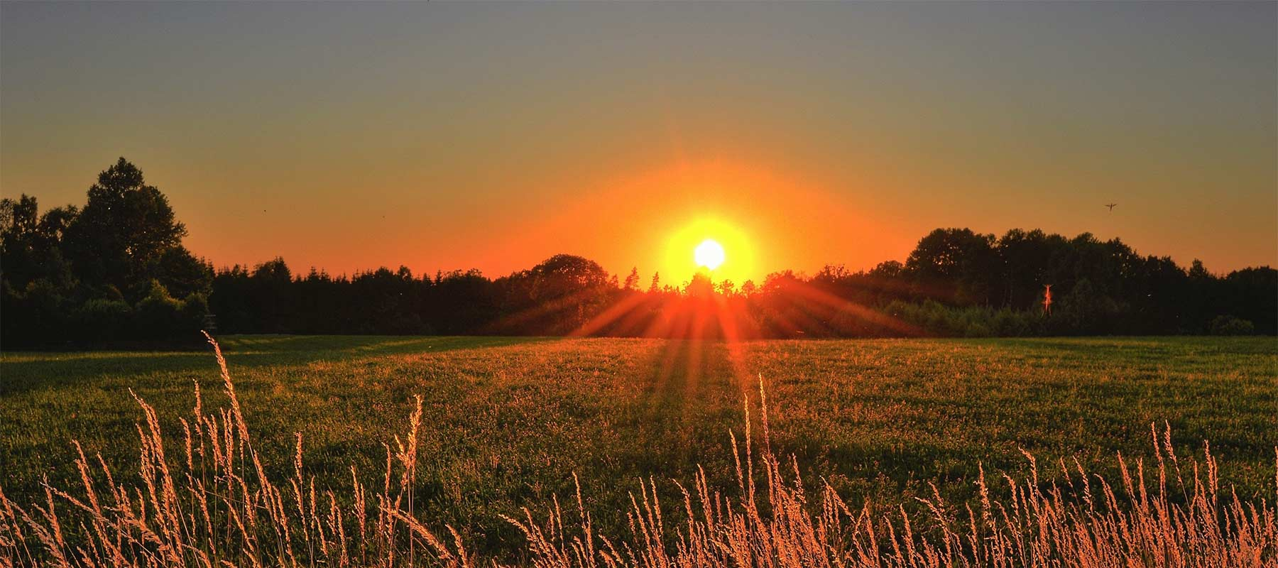 Sunrise over a meadow